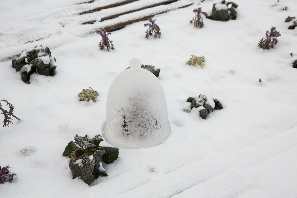 Wintergemuese_-010