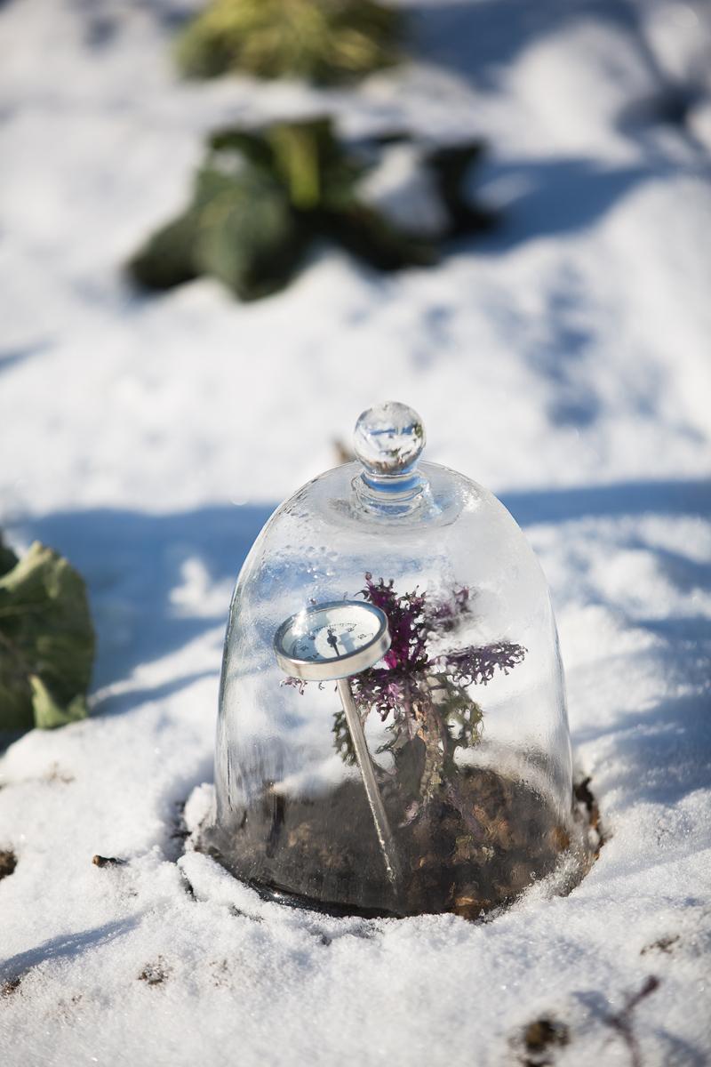Wintergemuese_-075